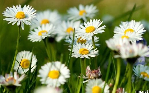ảnh hoa xuân tươi đẹp