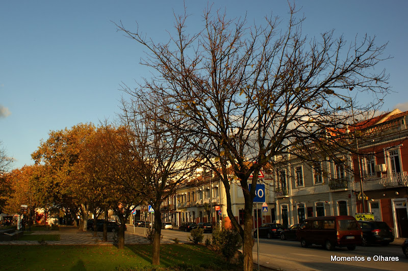 Outono em Setúbal, Avenida Luísa Tody