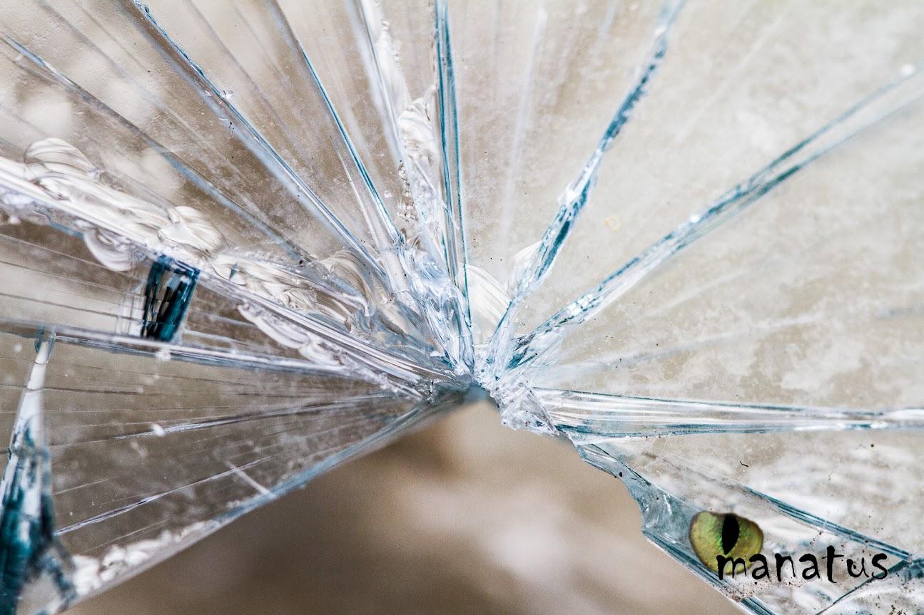 manatus foto blog cristal roto