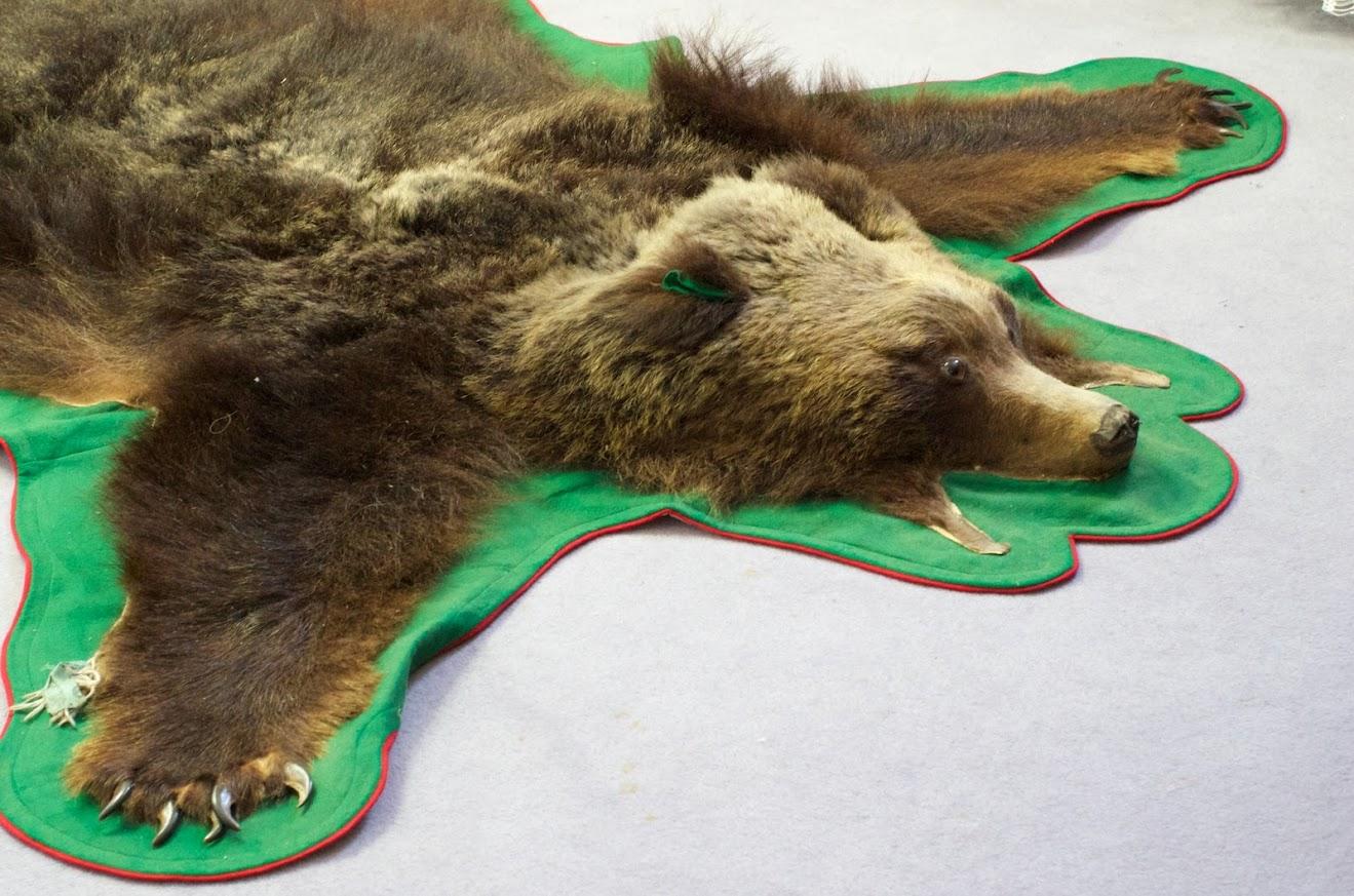 射撃で仕留めた熊