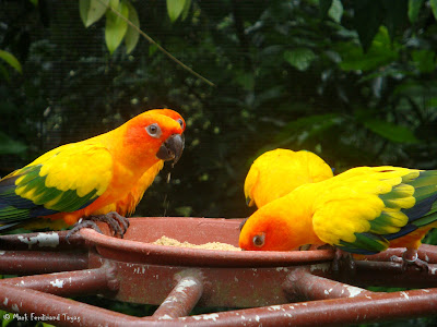 Jurong Bird Park Random Batch 2 Photo 5