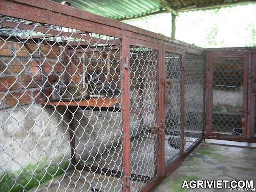 Agriviet.Com-42011a1302238248photoch.jpg