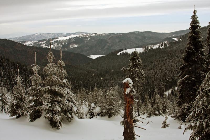 iarna zapada Comandau Lacauti Muntii Vrancei