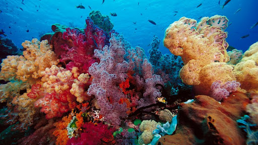 Scenic Soft Coral, Indonesia.jpg