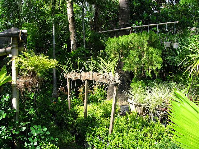 Из зимы в лето. Филиппины 2011 - Страница 7 IMG_0015%252520%2525287%252529