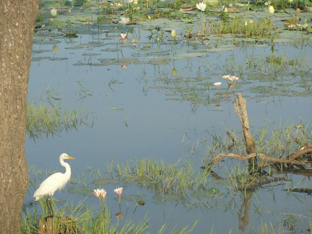 Yala-National-Park-5