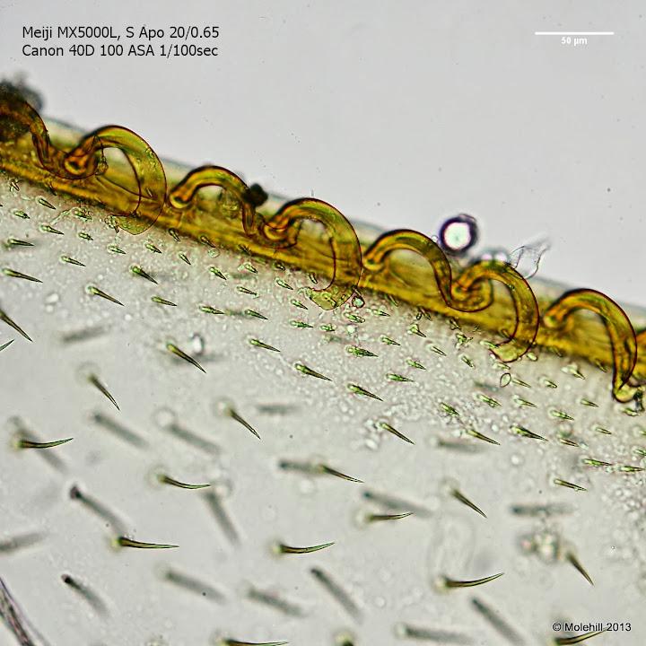 Bee wings under microscope 40x gallery diagram writing sample microscopy forum microbehunter microscopy magazine hymenoptera have four membranous wings the hind wings are smaller than sciox Image collections