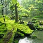 Сон зеленое болото