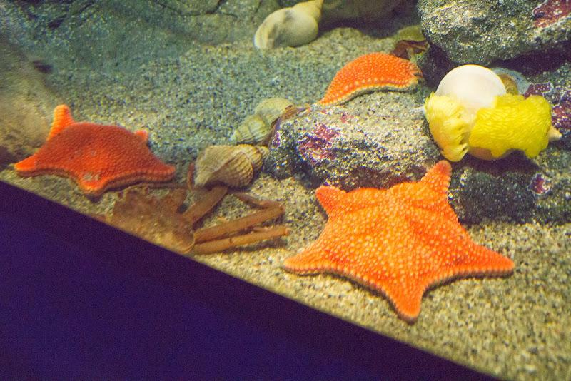 アクアワールド大洗水族館 写真6