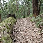 Mossy log beside Toomey walk (225928)