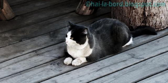 pisica cota 2000
