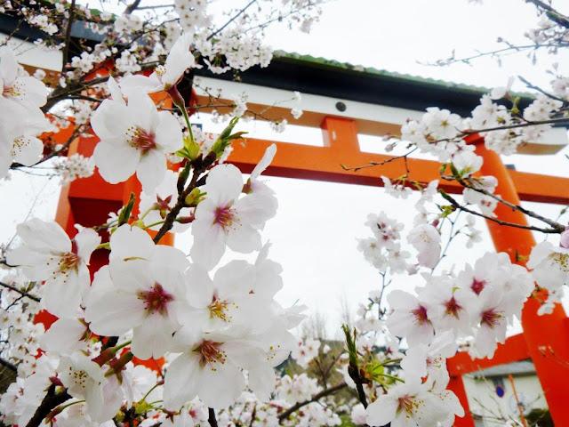 Khí hậu và bốn mùa ở Nhật Bản