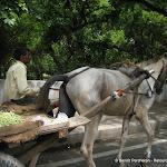 Vendeur d'haricots, Delhi