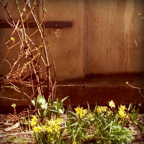 Die Mauer im Hof sieht endlich nicht mehr so trist aus