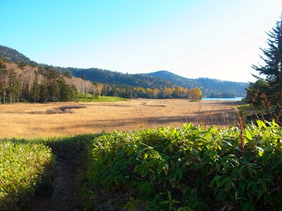 墓地から見える大江湿原の風景
