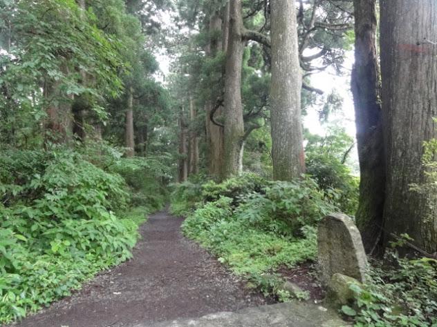 箱根旧街道 杉並木 東海道五十三次