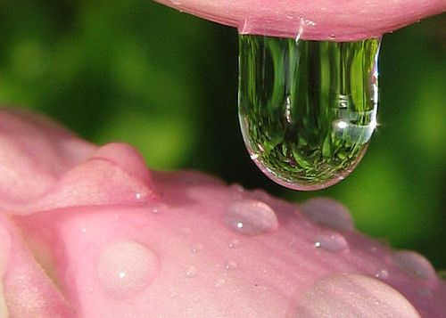 Pink in 50 Howling Examples of Dew Photography