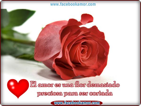 Ynocenta Imagenes De Amor Rojas