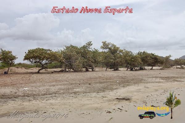 Playa Bahia de Plata, Estado Nueva Esparta, Municipio Gomez