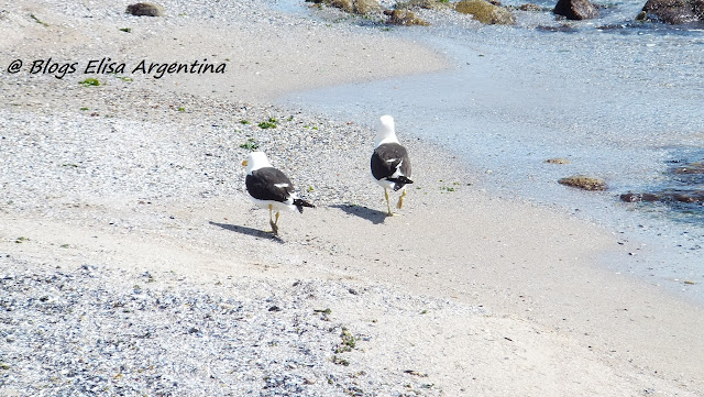 Gaviotas en Punta del Este, Uruguay,  Elisa N, Blog de Viajes, Lifestyle, Travel