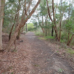 Track down to Thistlethwaite picnic area (54551)
