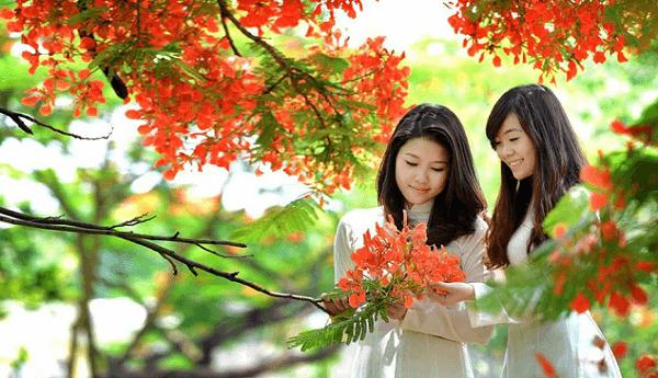 học sinh và hoa phượng