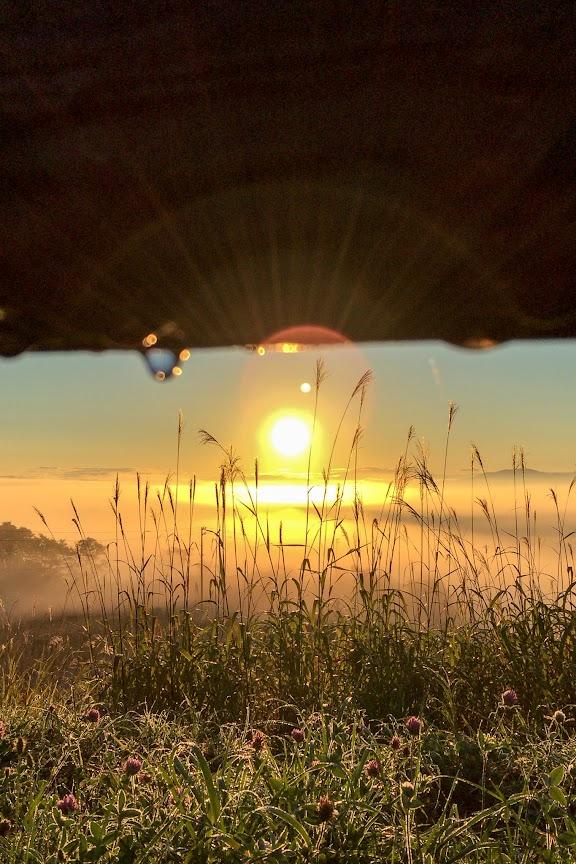 柵の雫に光る朝陽