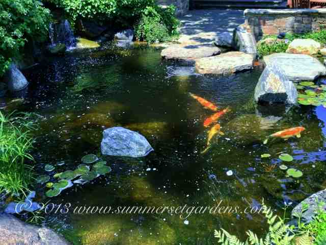 garden design koi pond design ideas