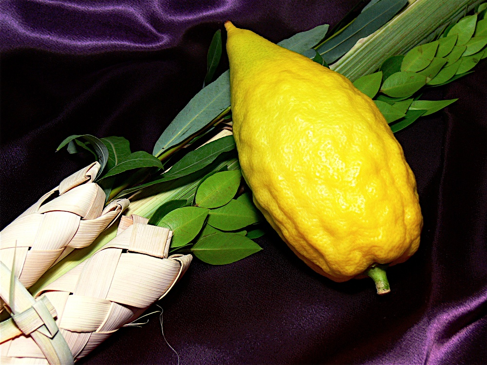 Symbols of Sukkot: etrog and four species of the lulav