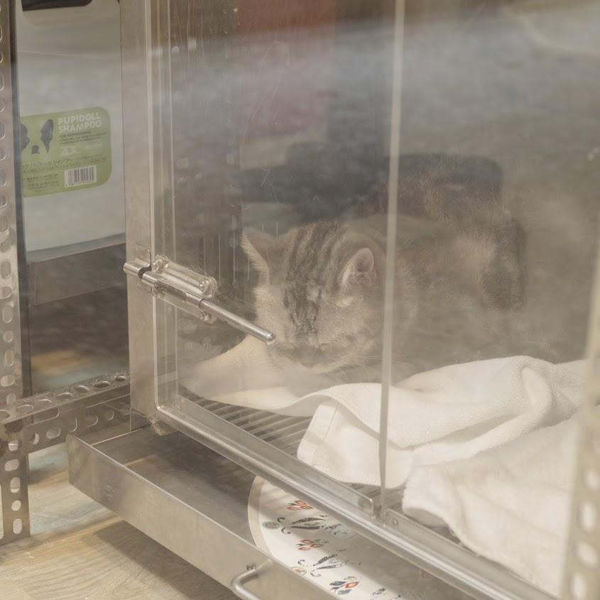 雨天偶遇寵物店的窗貓