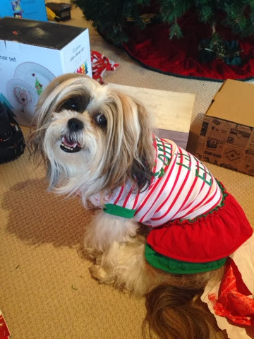 Christmas Elf Dog Outfit - Chanel Paige