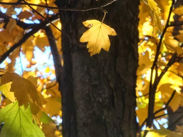 Стихотвоение про осень