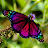 Solan de Brabant avatar image