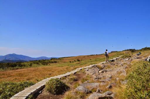 苗場山頂の湿原