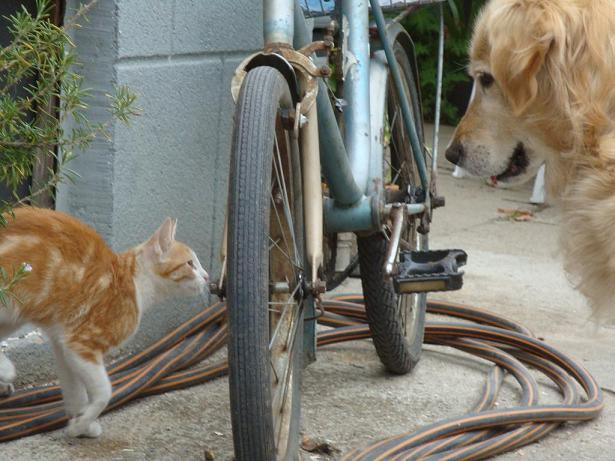котенок и собака фото