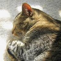Janet Hall's avatar