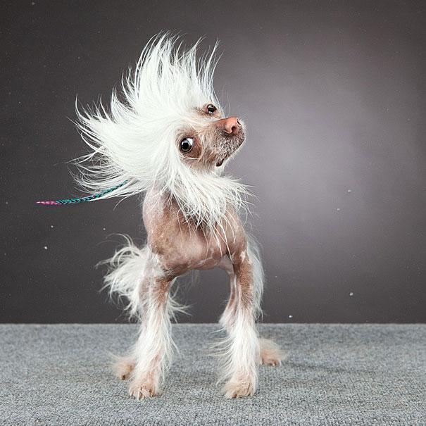 куче снимано в странни пози и смешни физиономии