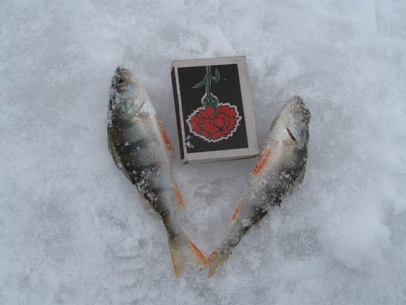 окунь зимняя рыбалка бугайка