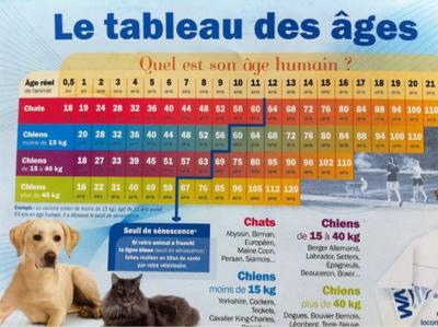 Le Blog De Franklin Le Bouledogue Francais Aux Us Bientot 24 Ans