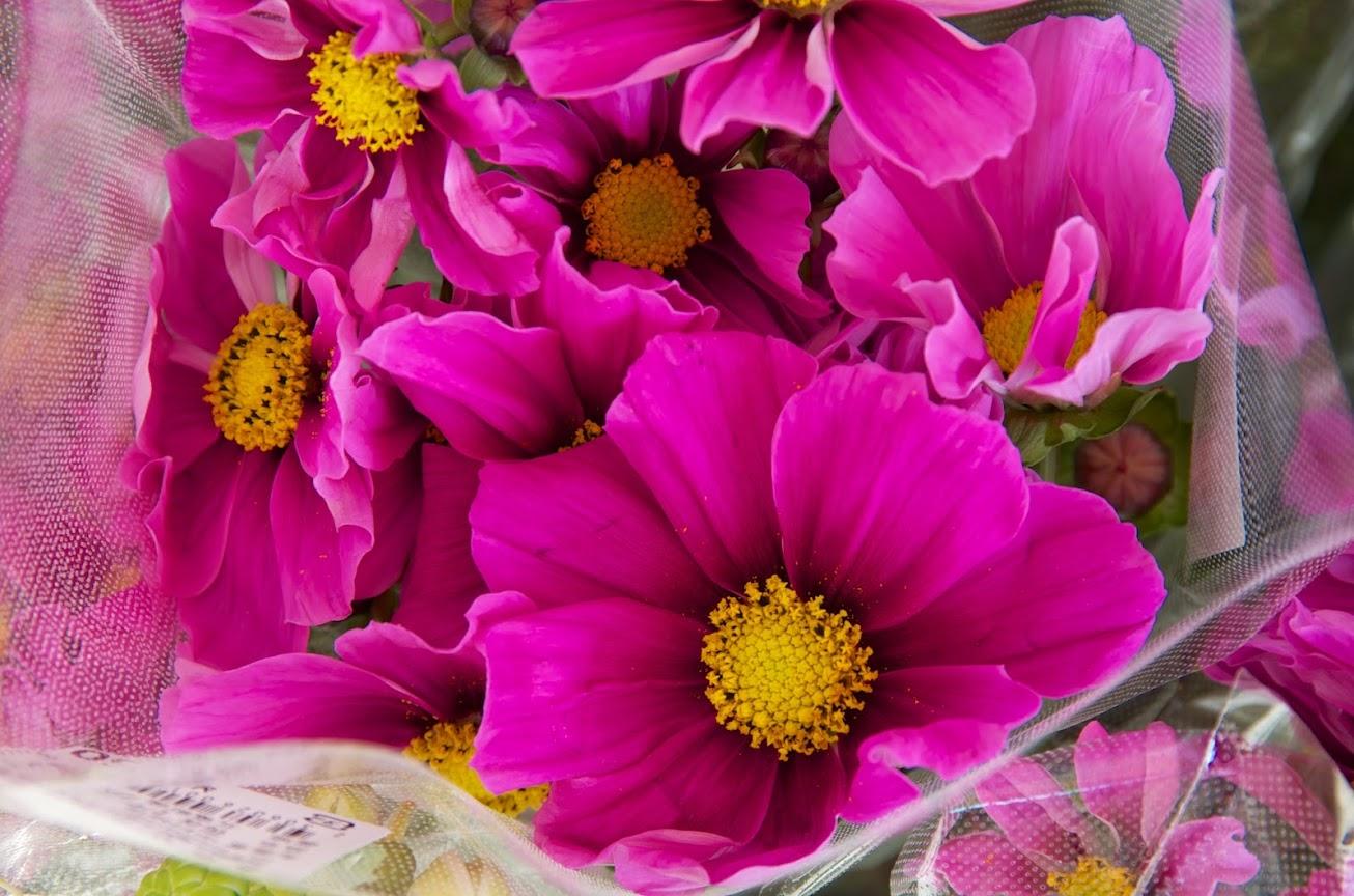 みのりっち北竜の「花卉(かき)」