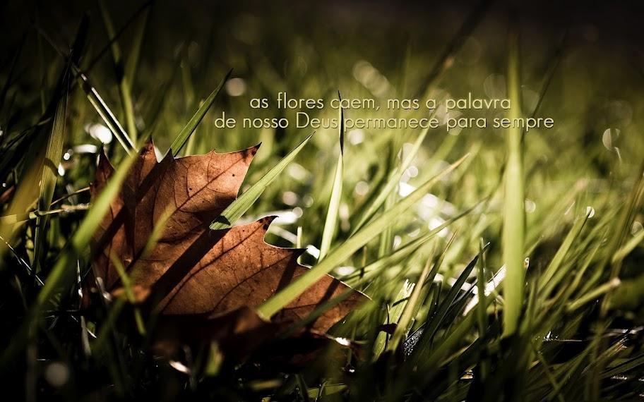 As flores caem, mas a palavra de nosso Deus permanece para sempre