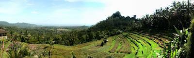 Panomora et rizières