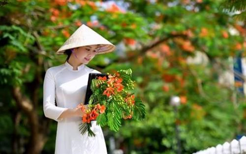 Ảnh cô gái ôm hoa phượng đỏ mùa hạ