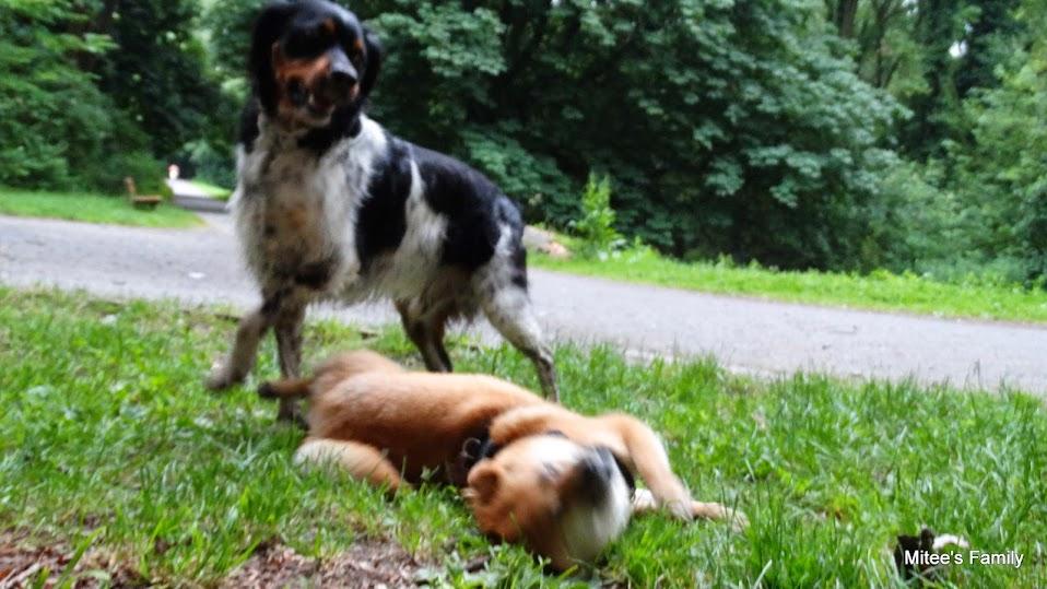 Balades canines en Nord (59)/Pas de Calais (62) - Boulogne-sur-Mer, Calais et Lille - Page 15 DSC00081