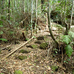 Rocky track winding through the Palm Grove NR (369796)
