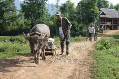 images%2B%281%29 Thơ mộng rừng thông Bản Áng