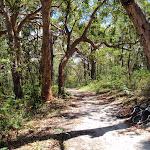 Warriwarri Lookout trail (235709)