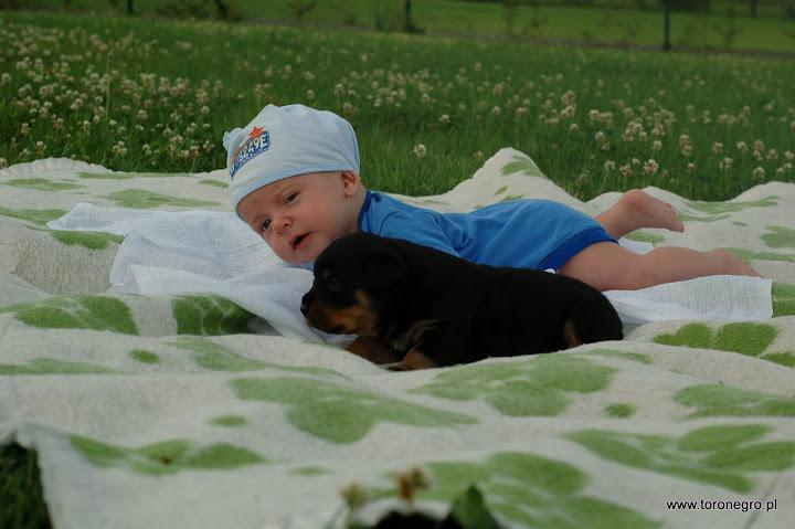 rottweiler i małe dziecko