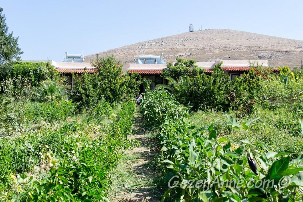 Bozcaada, Aral Tatil Çiftliği'ndeki sebze bahçesi