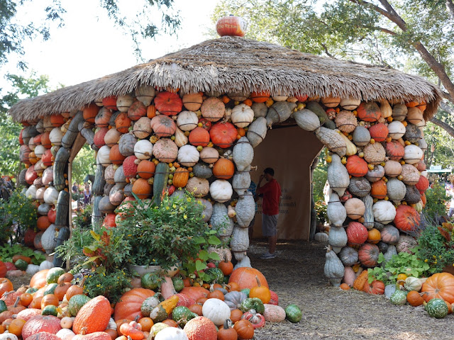 small building covered with pumpkins at the Dallas Arboretum